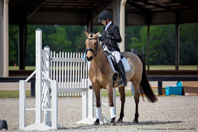 Working Equitation Ease of Handling Gate Obstacle