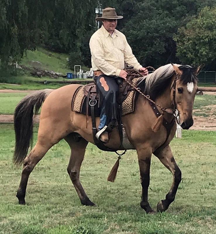 Working Equitation Dressage